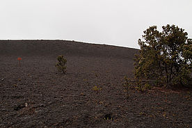 Foto: Devastation Trail am Kilauea - Big Island auf Hawaii